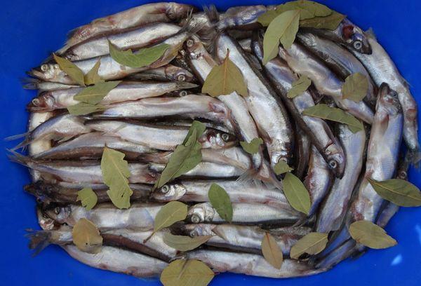 рыба посыпанная лавровыми листьями