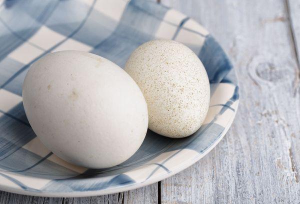 Гусиное и утиное яйца