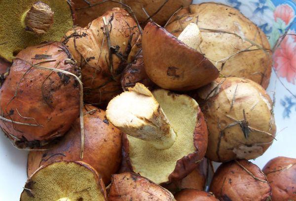 неочищенные грибы