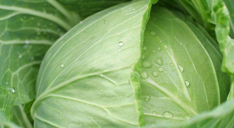 Как сварить капусту в микроволновке