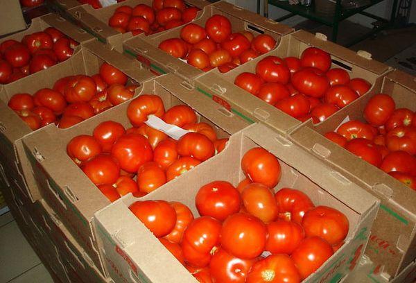 спелые томаты в ящиках