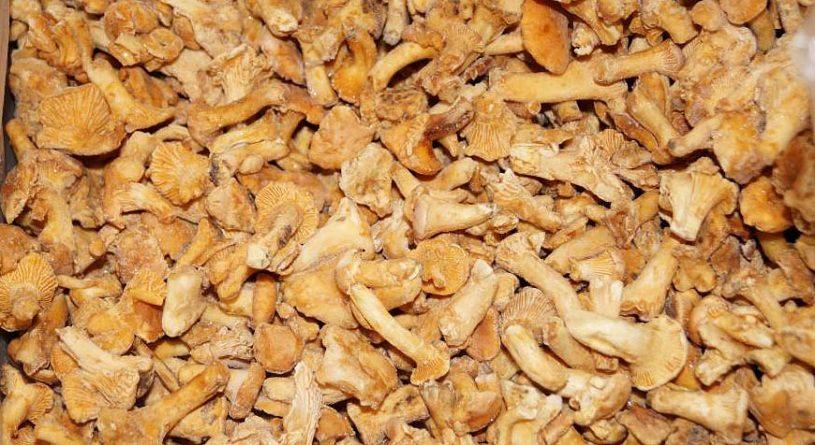 Сколько варить лисички перед заморозкой