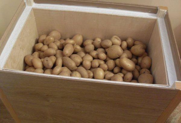 картошка на балконе в ящике