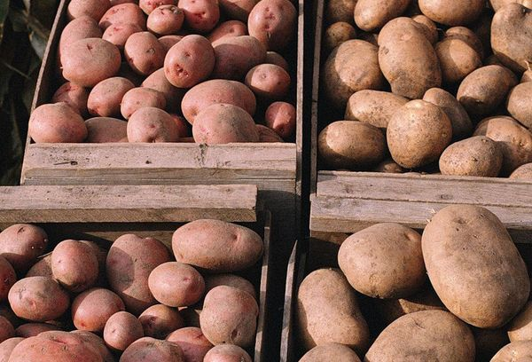 картошка в деревянных ящиках