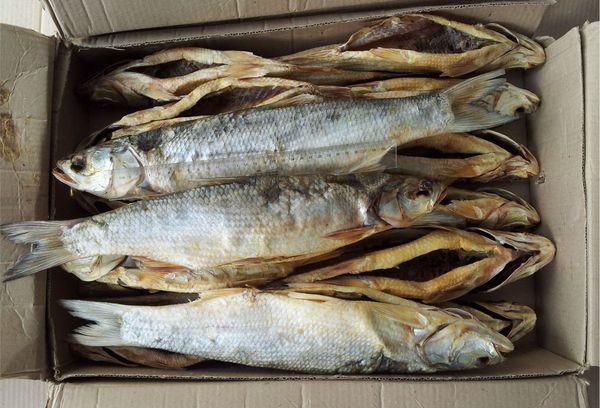 высушенная рыба в ящике