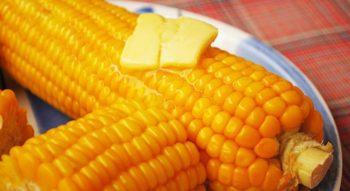Как хранить вареную кукурузу