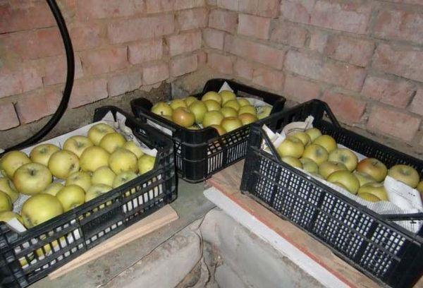 яблоки в стеллажах