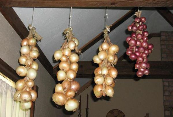 подвешанные луковицы в квартире