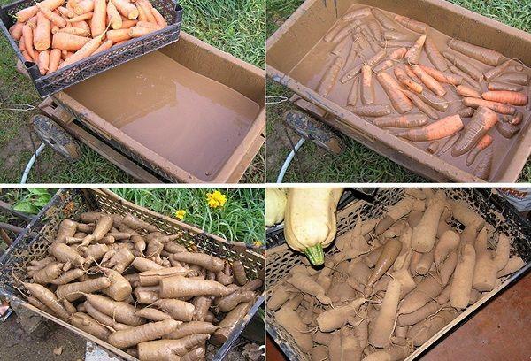 метод глинования моркови