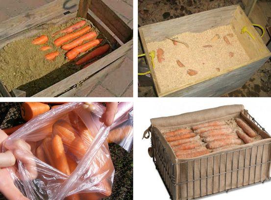 морковь в песке в ящиках