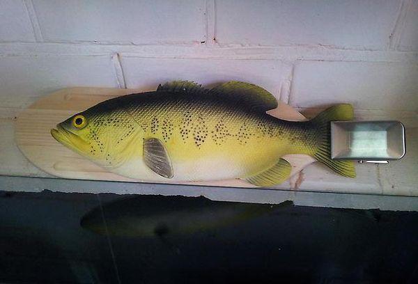 рыба на доске с зажимом на хвосте