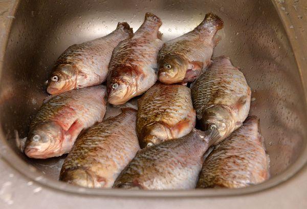 рыбы в раковине