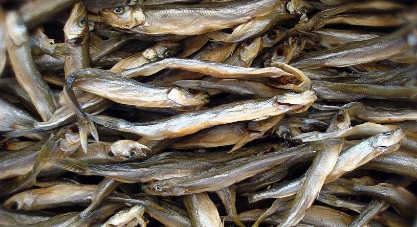 Как хранить вяленую и сушеную рыбу